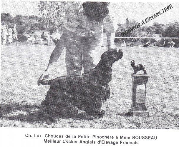 choucas-de-la-petite-pinochere-3pfi