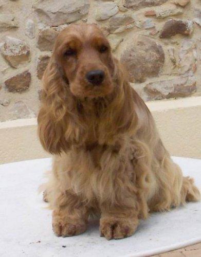 blondy-de-la-petite-pinochere-2