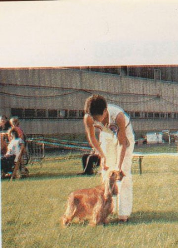 margote-de-la-petite-pinochere-2-championnat-europeen-1980