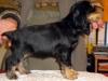 femelle-agrume-1-mois-et-demi-2009-037-web