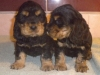 chiots-agrume-1-mois-7-jours-2013