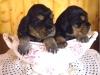 femelles-ellen-3-semaines-2013-ph-1-2013