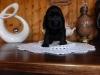 photos-appareil-photos-lumia-020-femelle-1-mois