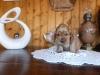 photos-appareil-photos-lumia-033-femelle-1-mois