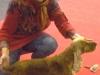 FANCHON de la Petite Pinochère née 27/09/2010